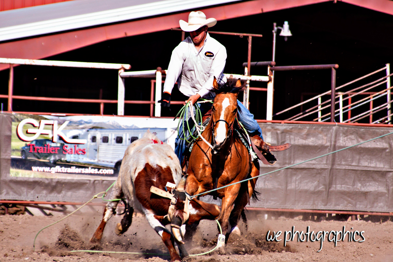 2012 Northernhorse Horse Sale Results