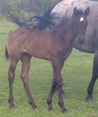 Skip This Hancock's 2016 filly