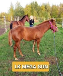 LK MEGA GUN
