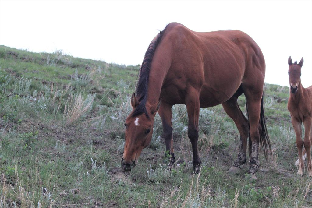 BROOD MARE:  Playful Mary