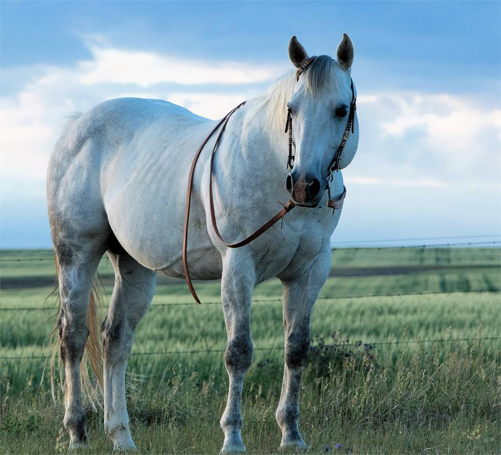 Image #3 (BROOD MARE: TT Lady Tanquery)