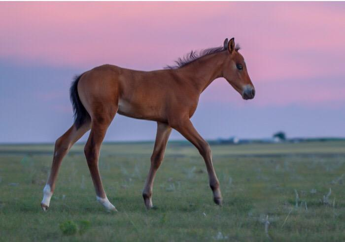 2019 Mary bay filly