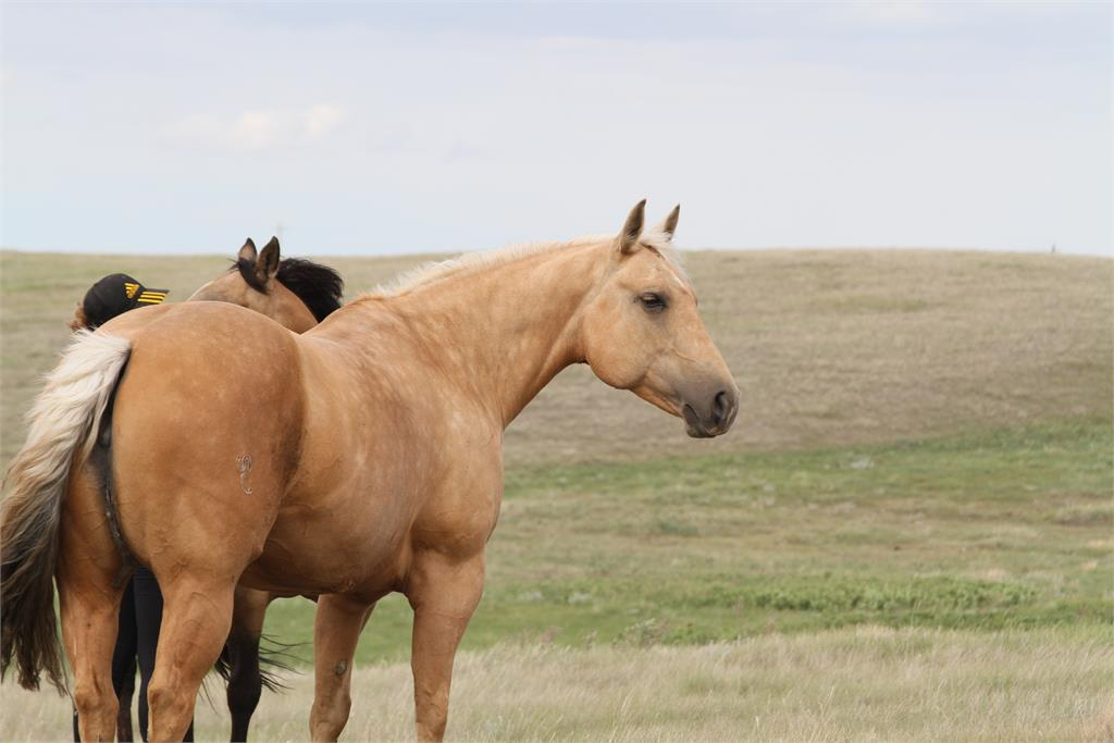 PERFORMANCE & BROOD MARE: All About Bling