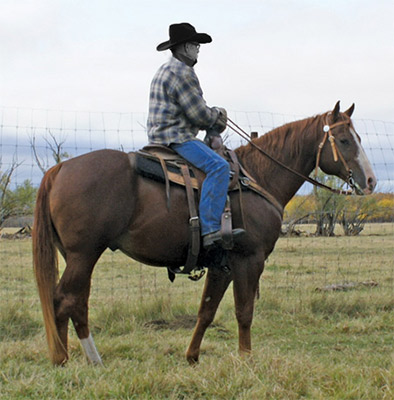 Image courtesy of Gould Ranch QH