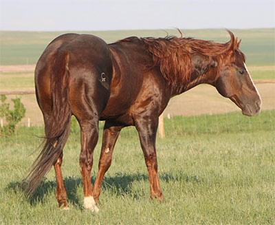 Image courtesy of Two C Ranch Horses