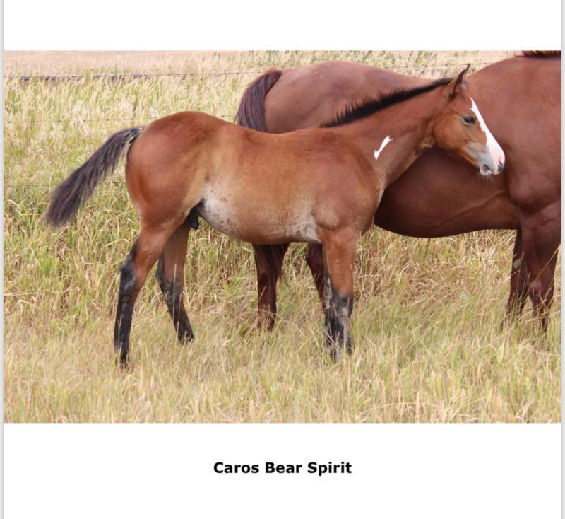 CAROS BEAR SPIRIT