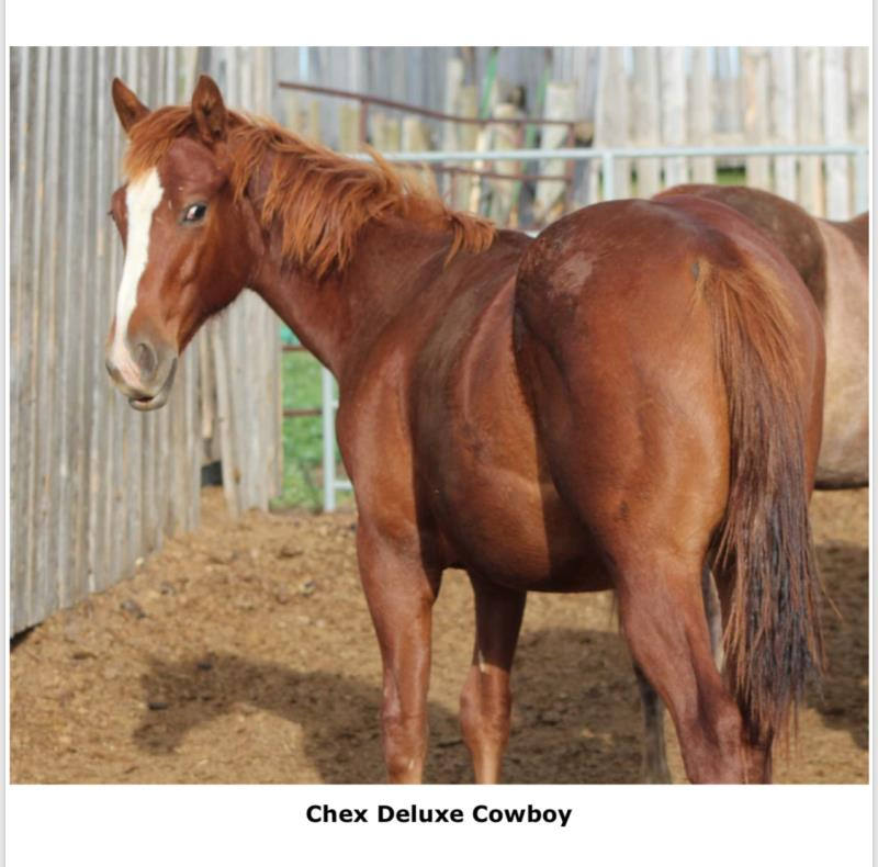 CHEX DELUXE COWBOY