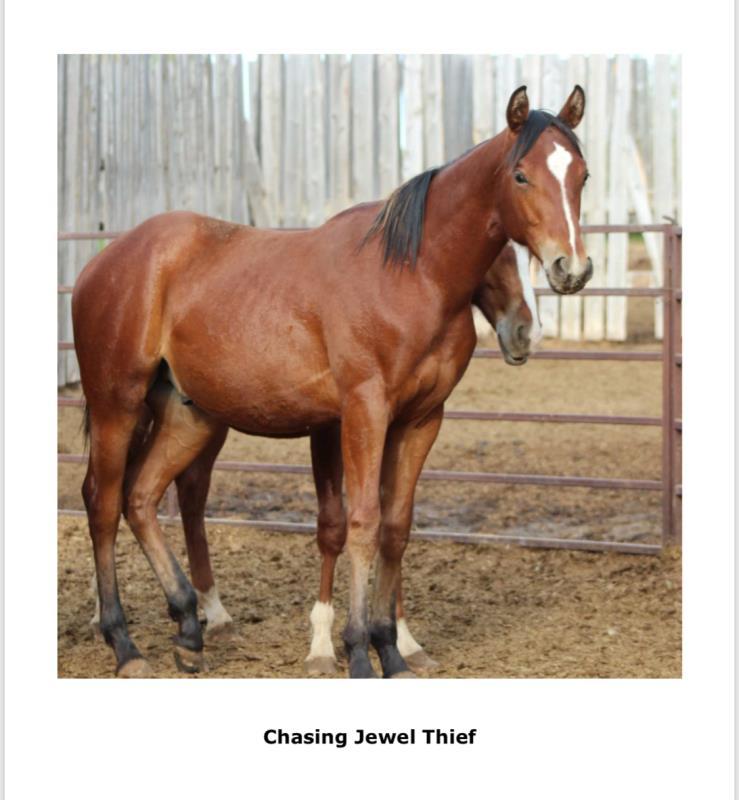 CHASING JEWEL THIEF