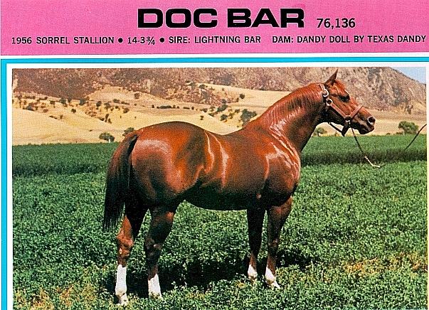 Doc Bar Quarter Horse