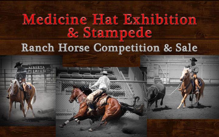 Horse Sale Info Medicine Hat Exhibition Amp Stampede
