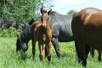 June's filly