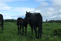 Fireball's filly