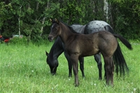 Jewel's filly