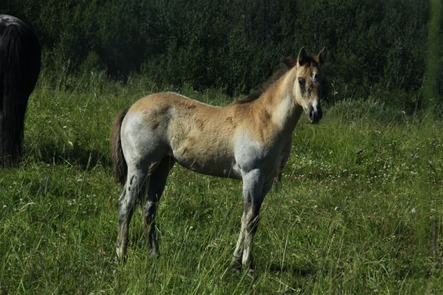 Kareema's filly