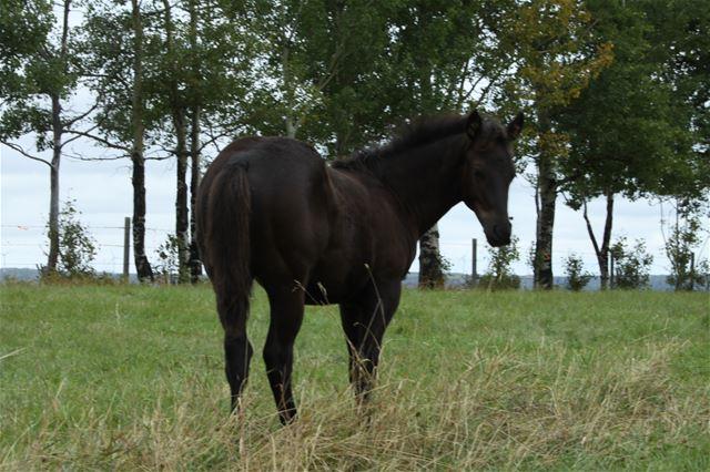 Lailaa's colt