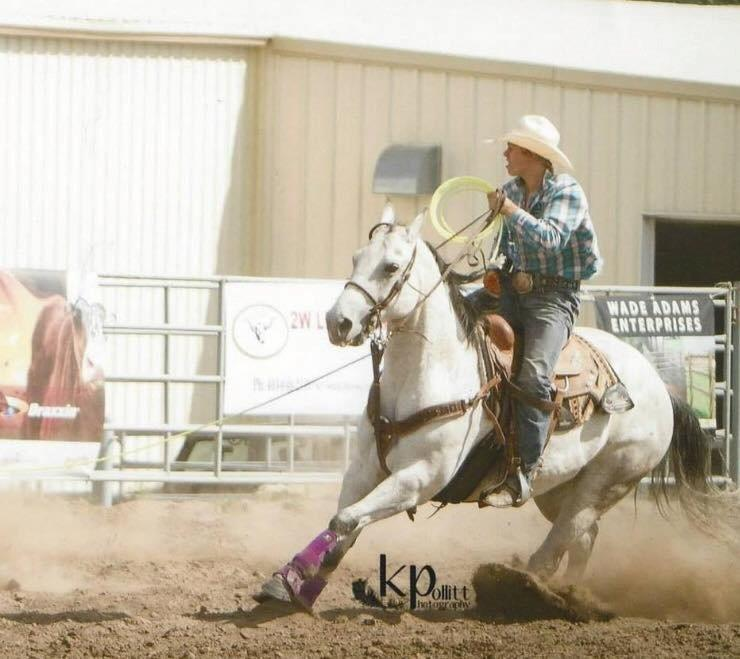 Sabre Quarter Horse Ranch Home Page