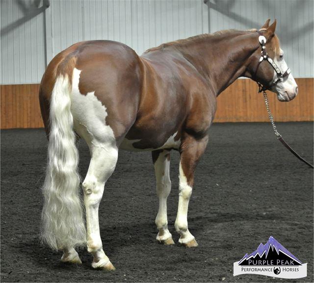 Breeding Information, Stallion