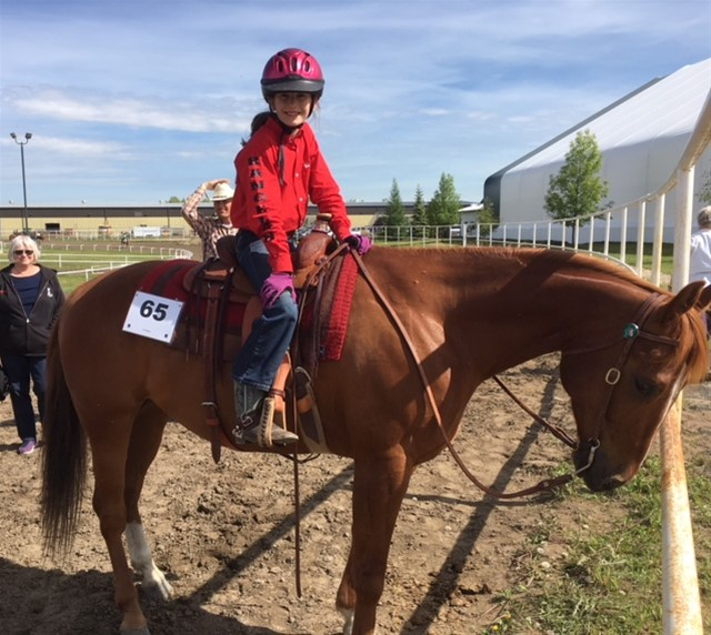 NU HOLLYWOOD BADGER 7 YR OLD SORREL GELDING