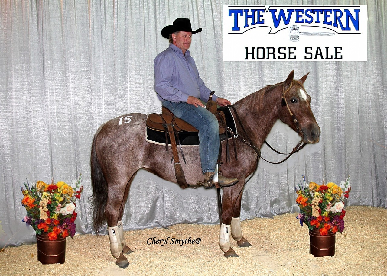 2015 Western Horse Sale Overal High Selling Horse