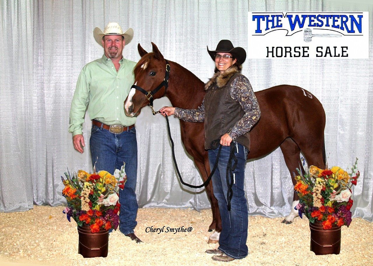 2015 Western Horse Sale High Selling Yearling