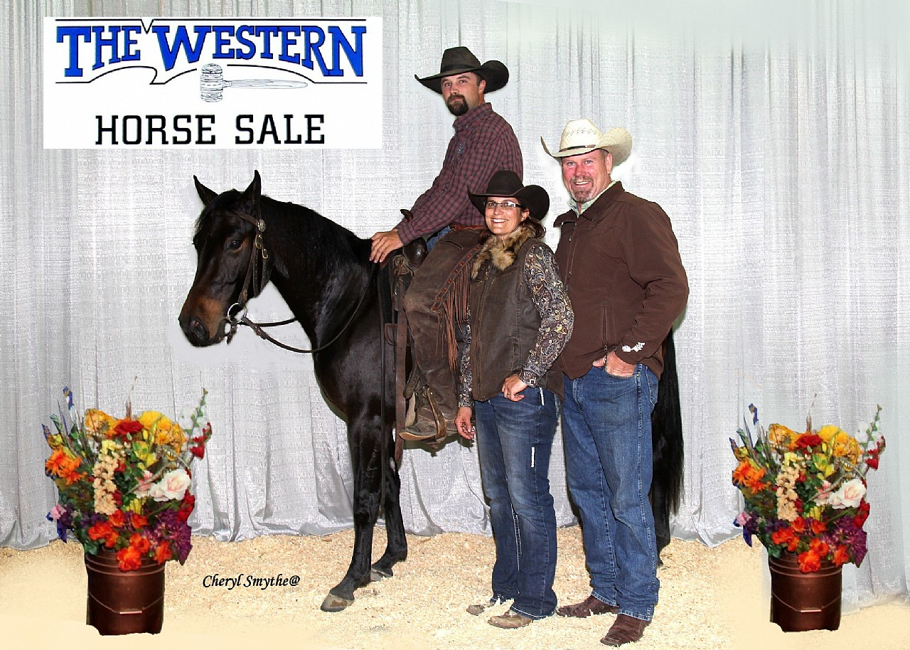 2015 Western Horse Sale High Selling Started 2 Year Old